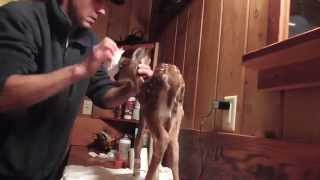 Download Bathing. Baby deer rescue and release Video