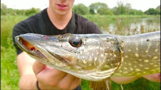 Download BIG Pike Attacks Hooked Perch - Ch. 8 Video