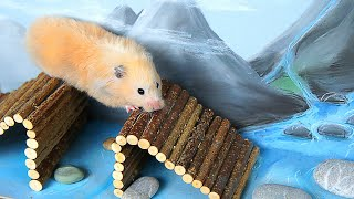 Download Hamster takes on the Military Obstacle Course! Video