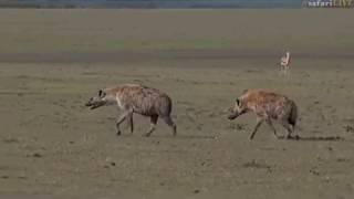 Download Pt 1 Safari Live's Sunset Safari Drive at 2:40 PM on Nov 22, 2017 Video