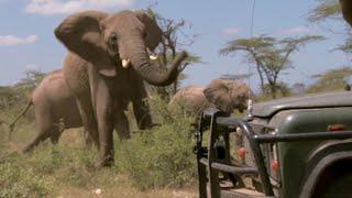 Download Vet Keeps Dangerous Herd Of Elephants At Bay | This Wild Life | BBC Video
