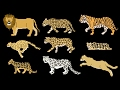 Download Big Cats - Animals Series - Lion, Tiger - The Kids' Picture Show (Fun & Educational Learning Video) Video