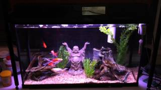Download Aquarium that requires NO water changes! Video