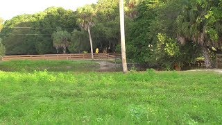 Download SWFL Eagles Lush Grasses & Full Ponds But No Eagles 06-23-17 Video