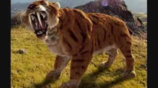 Download A Sabertooth Cat Tribute Video