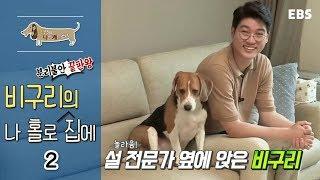 Download 세상에 나쁜 개는 없다 - 분리불안 끝판왕, 비구리의 나 홀로 집에 #002 Video