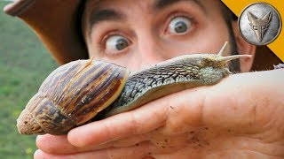 Download SUPER-SIZED SNAIL! Video
