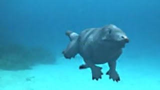 Download Morphed: When Whales had Legs Video
