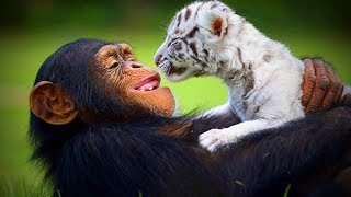 Download Animal's Best friends 🐶🐱 Unbelievable Animals Friendship (Full) [Funny Pets] Video