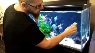 Download HOW TO CLEAN AN AQUARIUM THE RIGHT WAY Video