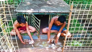 Download Building Duck House & Swimming Pools For Ducks Video
