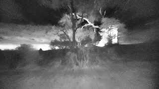 Download Djuma: Tingana male Leopad killed Impala-Hyena tried to steal it - 20:08 - 10/16/18 Video