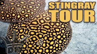 Download INSANE stingray aquarium tour!!! Video