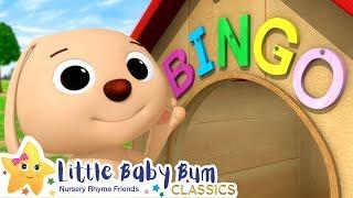 Download BINGO Song | Nursery Rhymes and Kids Songs | Baby Songs | Little Baby Bum Video