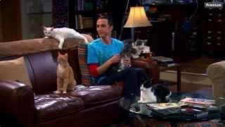 Download The Big Bang Theory - Sheldon & his Cats Video