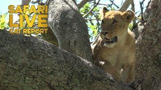 Download The Cat Report: 9 - 16 June Video
