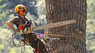 Download STIHL chainsaws and crane used to take down huge dead White Fir tree in Forest Falls CA Video