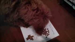 Download Puppy Food Challenge - Royal Canin, Science Diet, Tuscan Natural, Purina Pro Plan Video