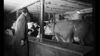 Download Vorschau: Zum Brunstverhalten des Hausrindes (Zeeb 1967) Video