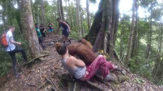 Download Held Hostage by an Orangutan, Bukit Lawang Jungle Video