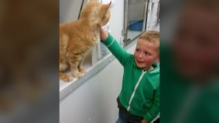 Download Little boy finds long-lost cat in rescue centre Video