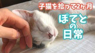 Download 子猫を拾って2ヶ月・ぽてとの日常 Video