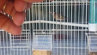 Download Desgracia en aviario... animo RUBEN y fuerza tete... Video