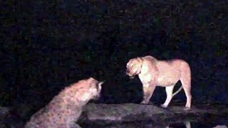 Download Cecil the Lion's Mate Survives Hyena Attack Video