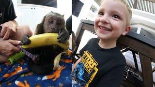 Download 4 Year Old Meets Monkey!!! Video