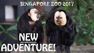 Download SINGAPORE ZOO 2017 Video