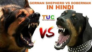 Download German Shepherd Vs Doberman In Hindi | Dog Comparison | The Ultimate Channel Video