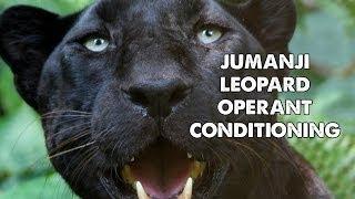 Download Jumanji Leopard Operant Conditioning GoPro Video