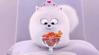 Download The Secret Life of Pets - Gidget Memorable the Best Moments Video