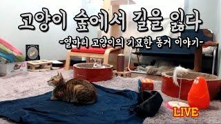 Download 고양이 숲에서 길을 잃다 *Live - 24시간 라이 고양이 관찰방송 Video