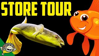 Download My Own Fish Store Tour. FRESHWATER PUFFERFISH, Nano Fish, Rare Plecos, Planted Aquariums. Video
