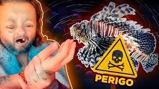 Download O PERIGOSO PEIXE LEÃO! | RICHARD RASMUSSEN Video