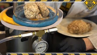 Download What Happens To A Brain In A Vacuum Chamber? Video