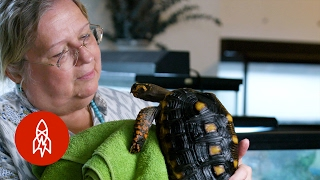 Download Meet Manhattan's Turtle Lady Video
