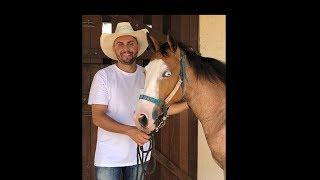 Download Mano Walter Mostrando os Novos Cavalos do Haras MW Video