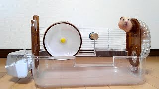 Download 掃除中のハムスターの行動が可愛い!おもしろ可愛いハムスターWhat are the hamsters doing during the cleaning? Video