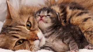 Download Mom Cat Loves Her Baby Kittens Very Much Video