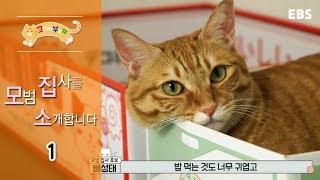 Download 고양이를 부탁해 - 모범집사를 소개합니다 -일러스트레이터 배성태편 #001 Video
