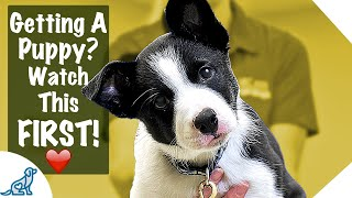 Download Puppy First Day Home Tips - Professional Dog Training Tips Video