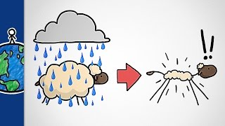 Download Why Don't Sheep Shrink In The Rain? Video