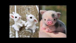 Download Funny Animals Compilation - Cutest Animals Ever 2019 Video