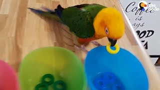 Download Smart Parrot Shows Off All His Tricks | The Dodo Video