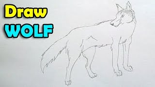 Download How to draw a wolf step by step easy for kids Video