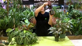 Download Tech talk merant calathea Video