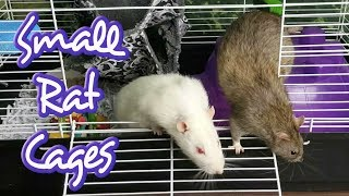 Download Why Small Rat Cages Don't Work Video