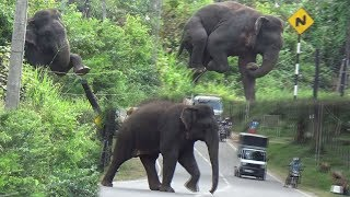 Download Wild elephant breaking an Electric fence ! Video